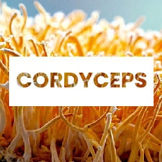 superalimento cordyceps