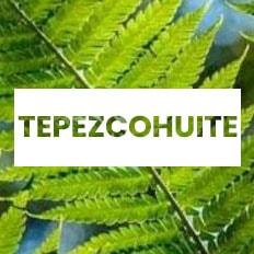 superalimentos árbol Tepezcohuite para adelgazar