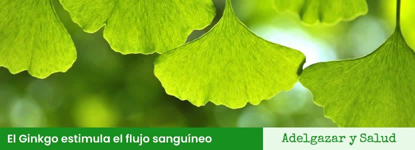 superalimentos Ginkgo Biloba estimula flujo sanguíneo