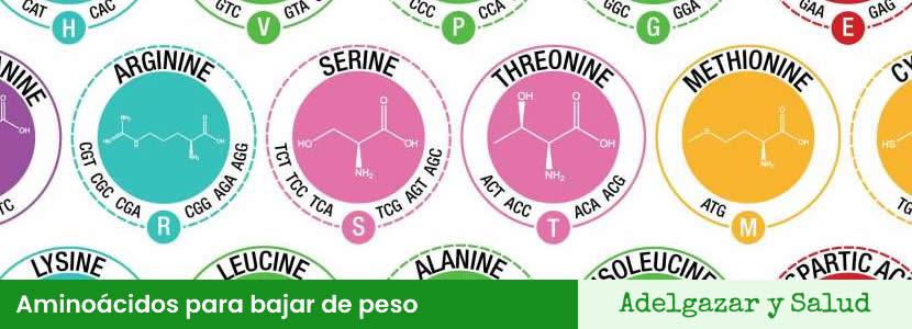 Aminoácidos para bajar de peso