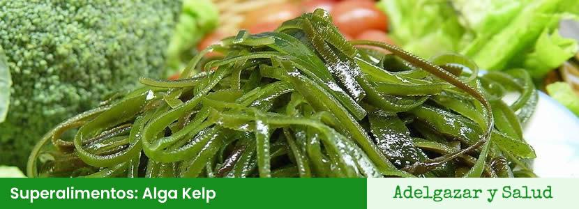 superalimentos alga kelp